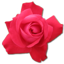 Rose-Cerise-icon